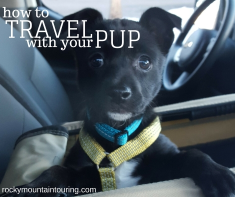travel-pup